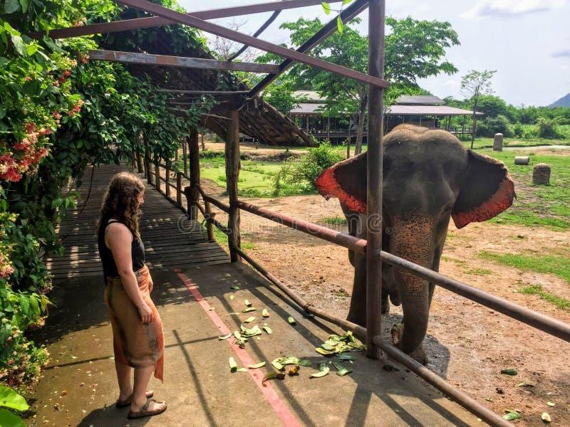 Een jonge vrouwelijke toerist die hello aan een reddingsolifant in ElephantsWorld zeggen royalty-vrije stock foto