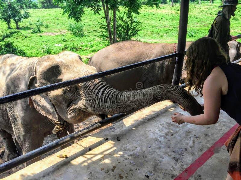Een jonge vrouwelijke toerist die een olifant voeden in ElephantsWorld buiten Kanchanaburi Thailand royalty-vrije stock fotografie