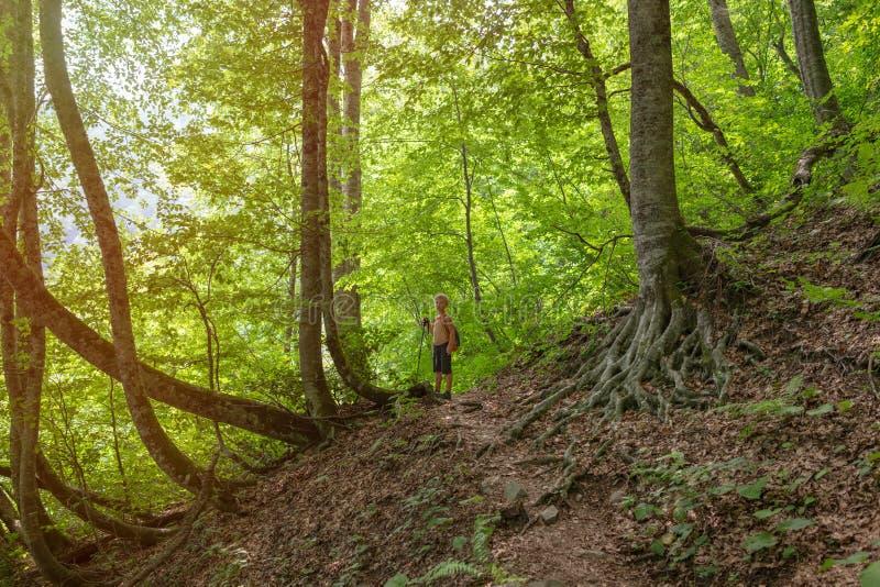 Een jongensreiziger met een trekkingspolen loopt langs een sleep in een dicht groen bos in het zonsonderganglicht stock foto's