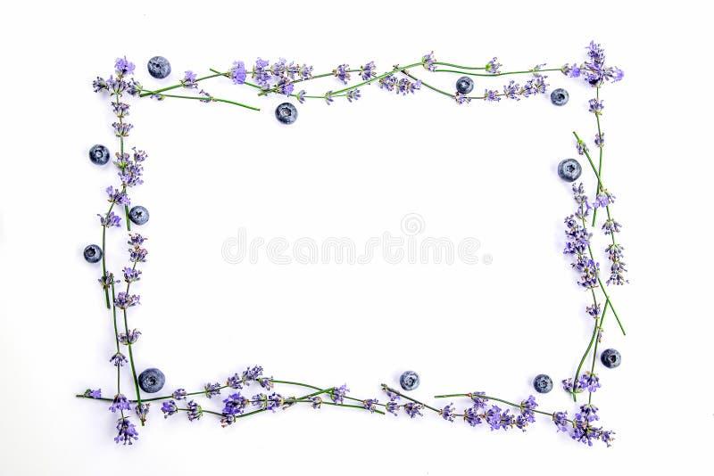 Een kader van verse lavendelbloemen en bosbessen op een witte achtergrond De de lavendelbloemen en bosbessen bespotten omhoog De  stock afbeelding