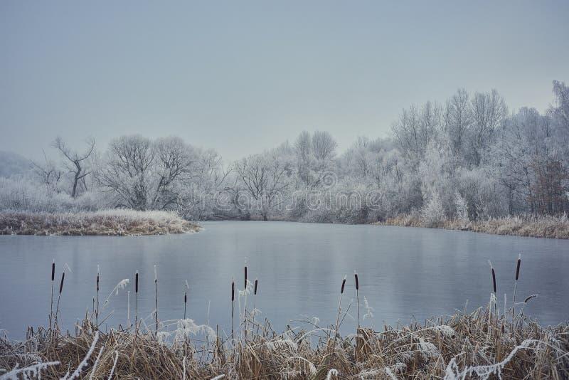 Een kalme, bevroren vijver met cattail royalty-vrije stock afbeeldingen