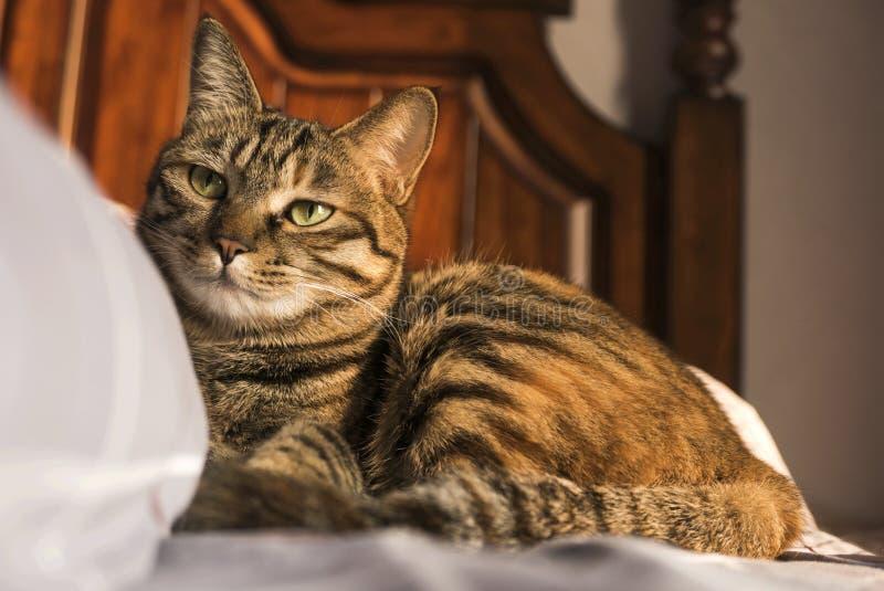 Een kalmte van de kat stock foto