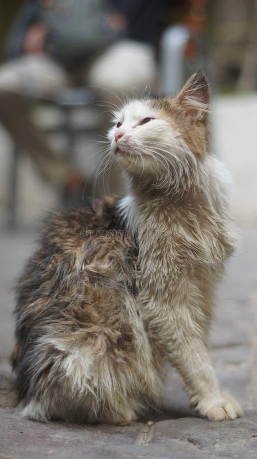 Een kat stock afbeelding