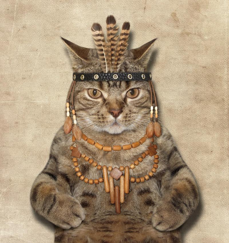 Een kat is een Amerikaanse Indiër royalty-vrije stock foto's