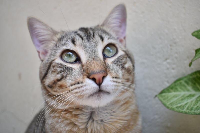 een kat bekijkt de hemel royalty-vrije stock foto's