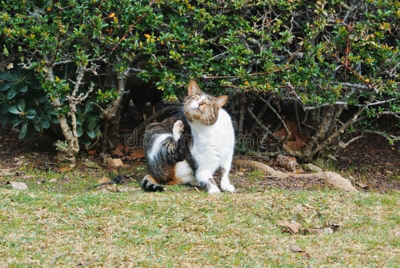 Een kat die krassen zitting op het gras dichtbij de struik in Th royalty-vrije stock foto's