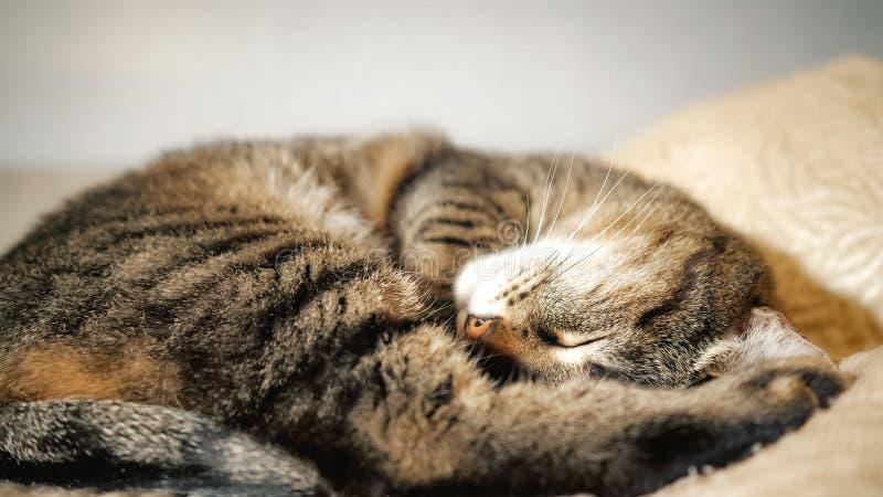 Een kat die op de bank liggen royalty-vrije stock afbeelding