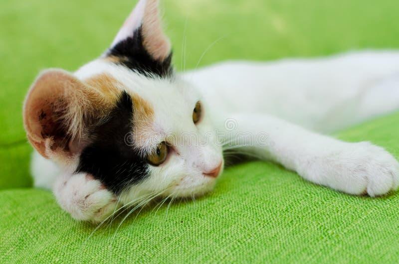 Een kat die op een groene laag rusten stock foto