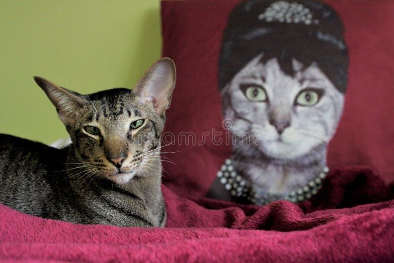Een kat en de koningin royalty-vrije stock afbeelding
