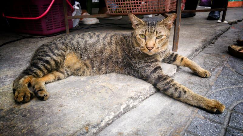 Een kat genoemd Tijger slaperige ogen op straat stock afbeelding