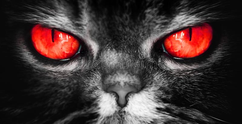 Een kat met rode duivelsogen, een kwaad vreselijk gezicht van een nachtmerrie, kijkt direct in de ziel, camera stock foto