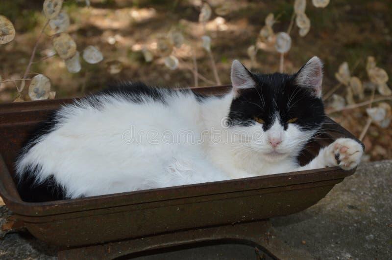 Een kat neemt buiten een rust royalty-vrije stock foto