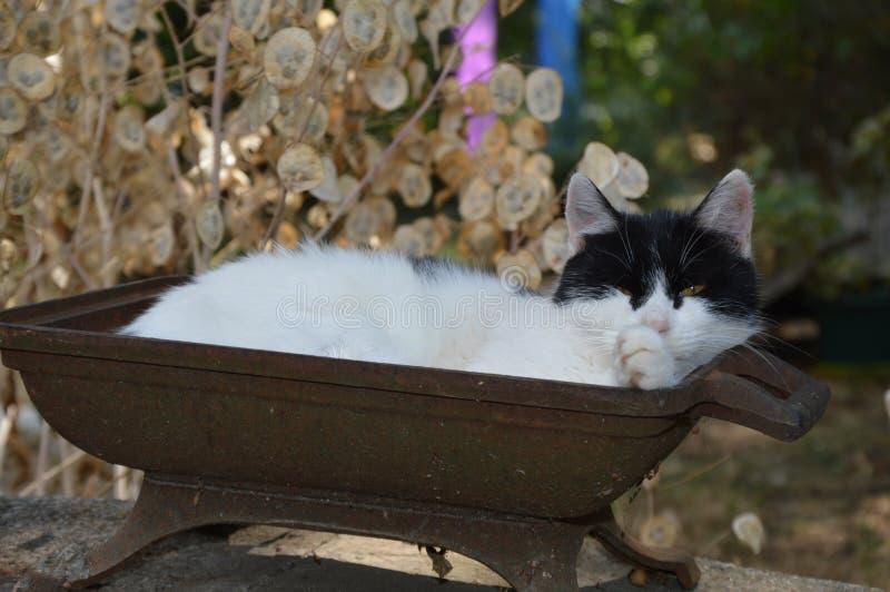 Een kat neemt buiten een rust stock foto