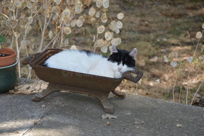 Een kat neemt buiten een rust stock fotografie
