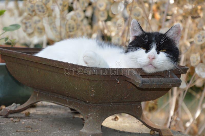 Een kat neemt buiten een rust stock afbeeldingen