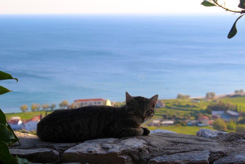 Een kat op een muur stock afbeeldingen