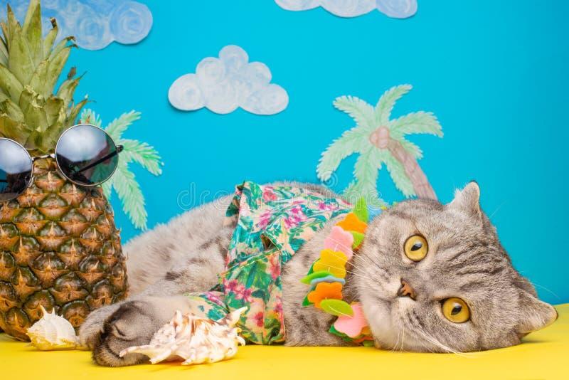 Een kat op vakantie in een Hawaiiaans overhemd met ananassen en zonglazen Op het strand met malma Een concept rust, ontspanning, royalty-vrije stock foto's