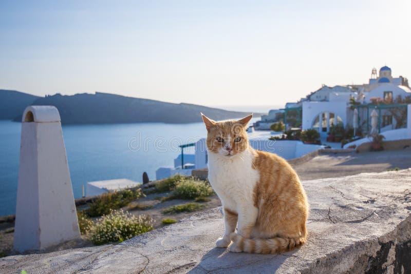 Een kat in Santorini royalty-vrije stock foto