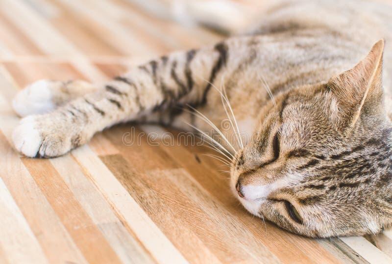 Een kat slaapt royalty-vrije stock foto