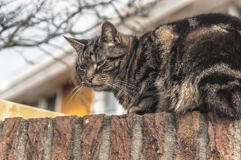 Een kat zit op een steenmuur royalty-vrije stock foto's