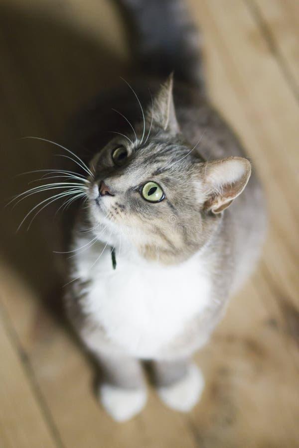 Een Kat zit thuis op het letten royalty-vrije stock afbeeldingen