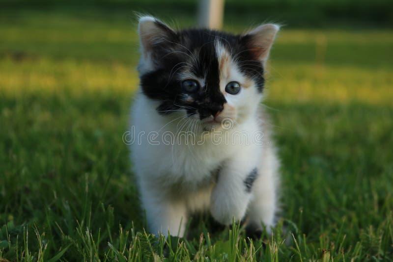 Een katje op het gras stock foto's