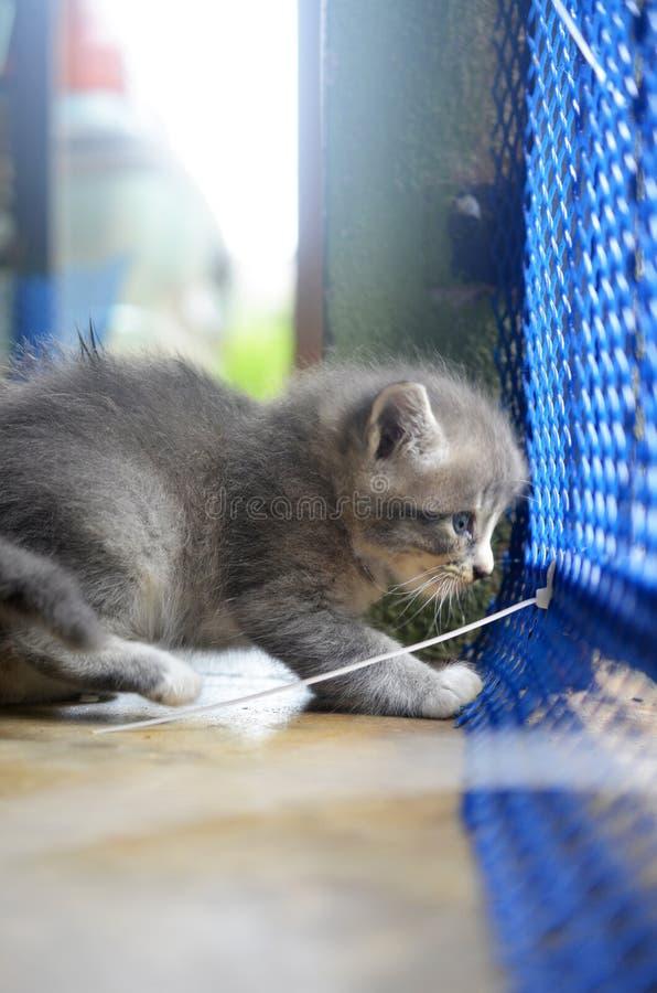 Een katjesspel alleen in de kooien stock afbeelding