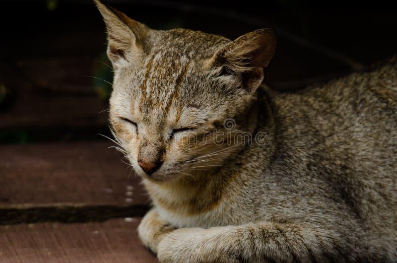 Een katten` s dutje in de middag royalty-vrije stock foto