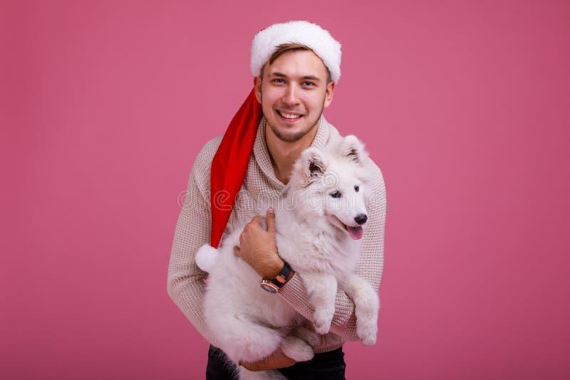 Een kerel die a houden samoyed hond op zijn handenclose-up op een roze achtergrond stock afbeeldingen