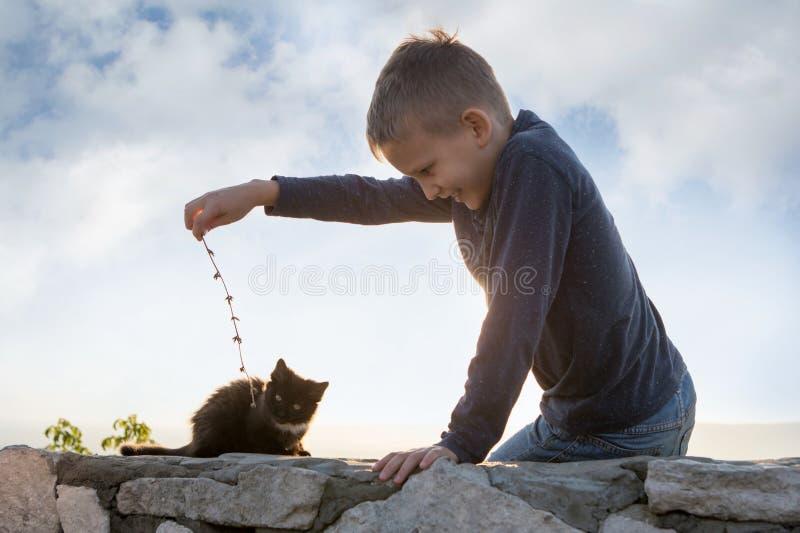 Een kind speelt met een katje Communicatie met dieren Blije jongen Boom op gebied stock afbeeldingen