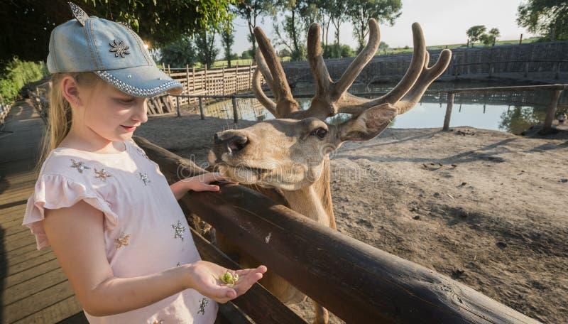 Een kind voedt een leuk hert dichtbij de omheining royalty-vrije stock foto