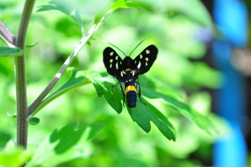 Een klein die insect door groen wordt omringd stock foto's