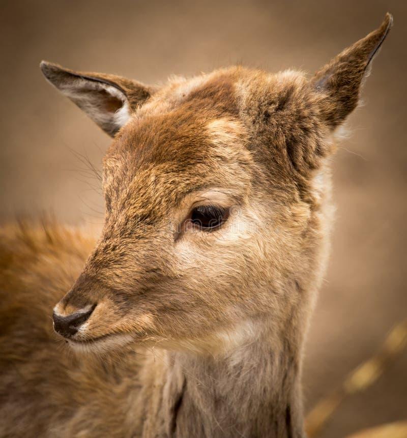 Een klein hert in het park royalty-vrije stock foto's