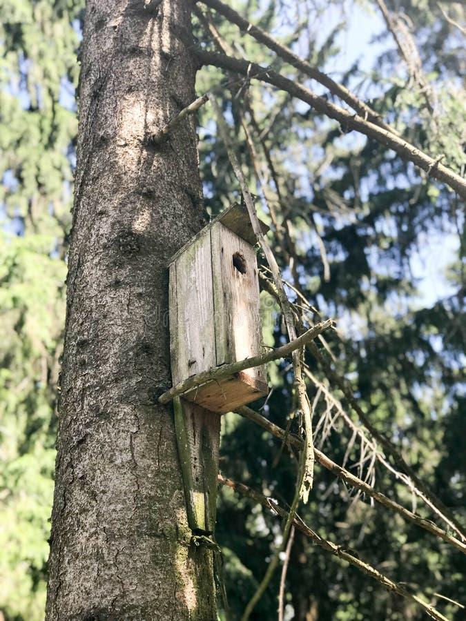 Een klein houten vogelhuis, een huis voor vogels van planken van zelf-gemaakte het hangen hoogte op een pijnboomboom in het bos stock foto's