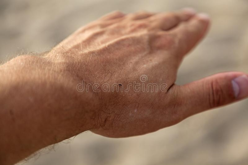 Een klein insect op mijn hand stock foto