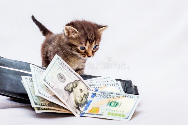Een klein katje dichtbij een beurs met dollars Eerste inkomens Het ` s stock foto