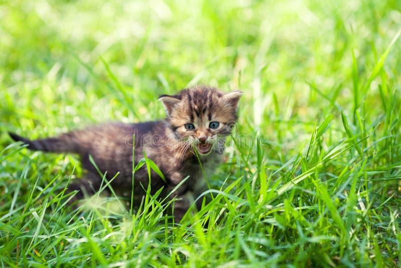Een klein katje in groen gras royalty-vrije stock afbeelding