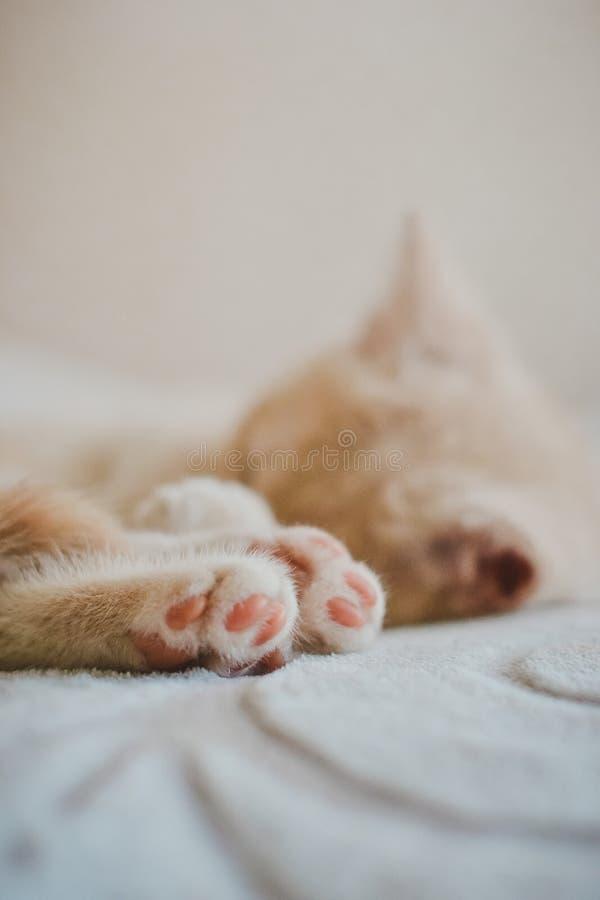 Een klein katje ligt slaap stock afbeelding