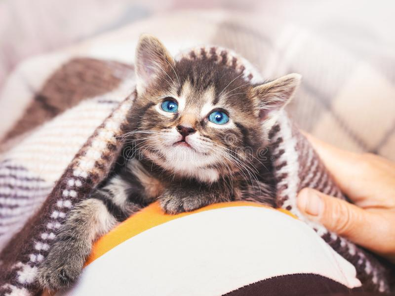 Een klein katje met blauwe ogen kijkt van onder de plaid Kiten stock foto's
