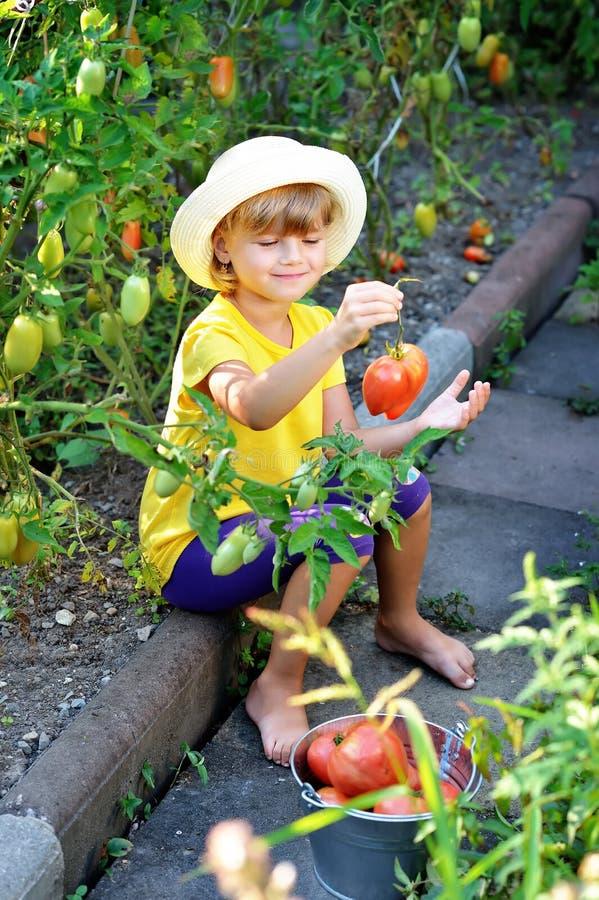 Een klein, leuk meisje in een hoed oogst een rijpe oogst van ri stock foto