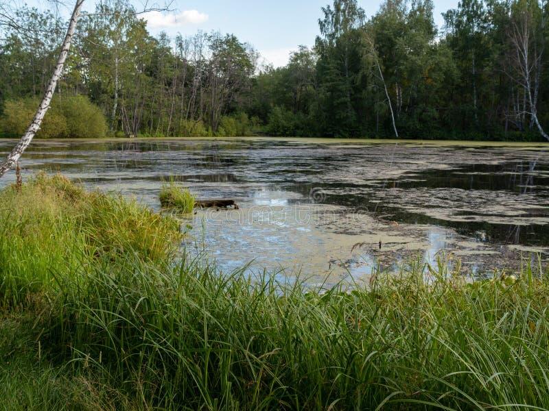Een klein meer met dik gras en bos op de kusten royalty-vrije stock fotografie