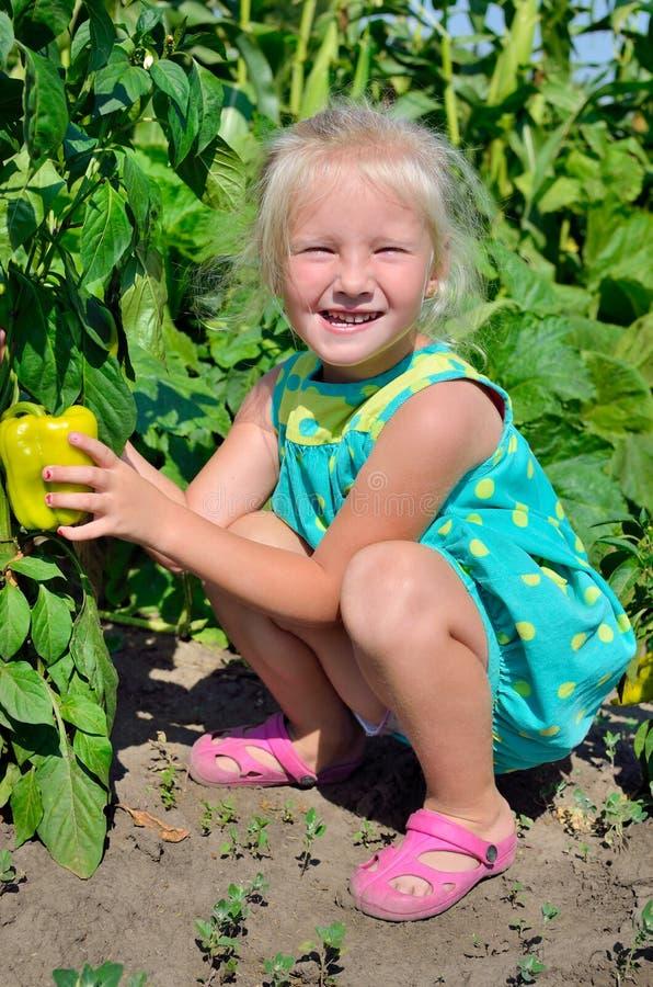 Een klein meisje verzamelt een gewas van peper op de keuken-tuin stock foto's