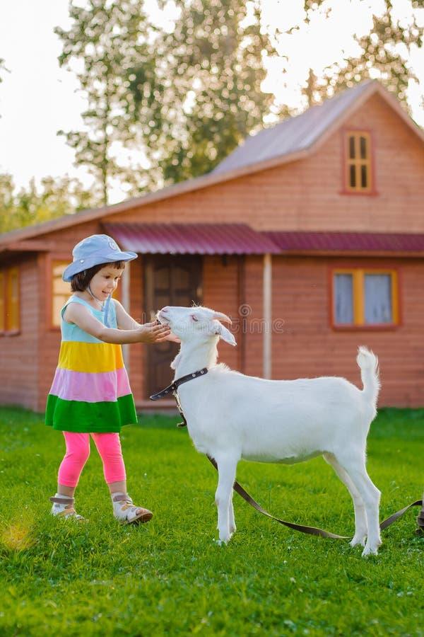Een klein meisje voedt een geit op het gazon de zonnige zomer, in een land in Rusland royalty-vrije stock foto's