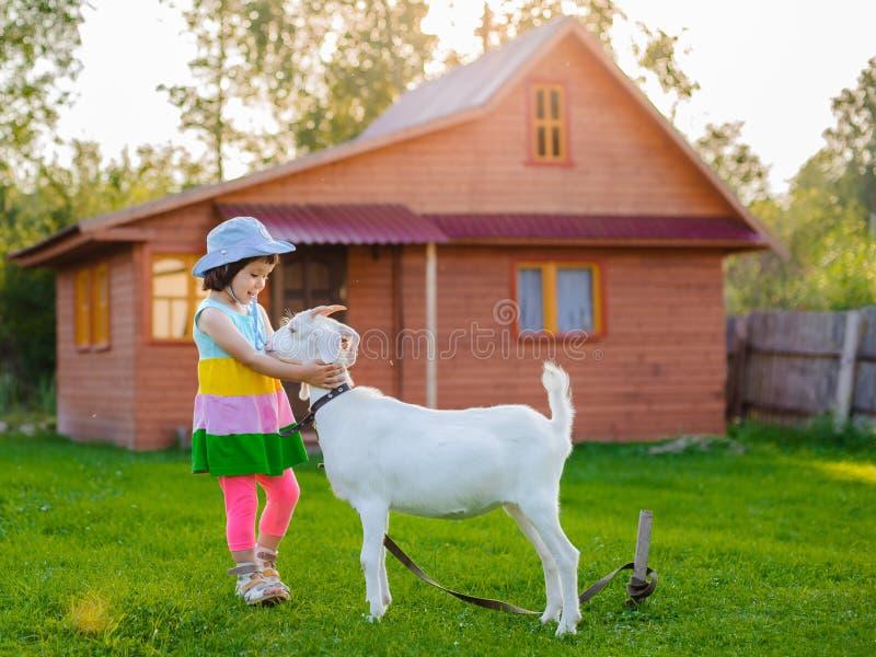 Een klein meisje voedt een geit op het gazon de zonnige zomer, in een land in Rusland stock afbeeldingen