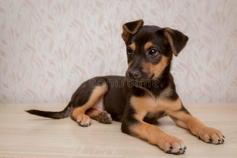 Een klein puppy met lange benen ligt op een lijst royalty-vrije stock afbeelding