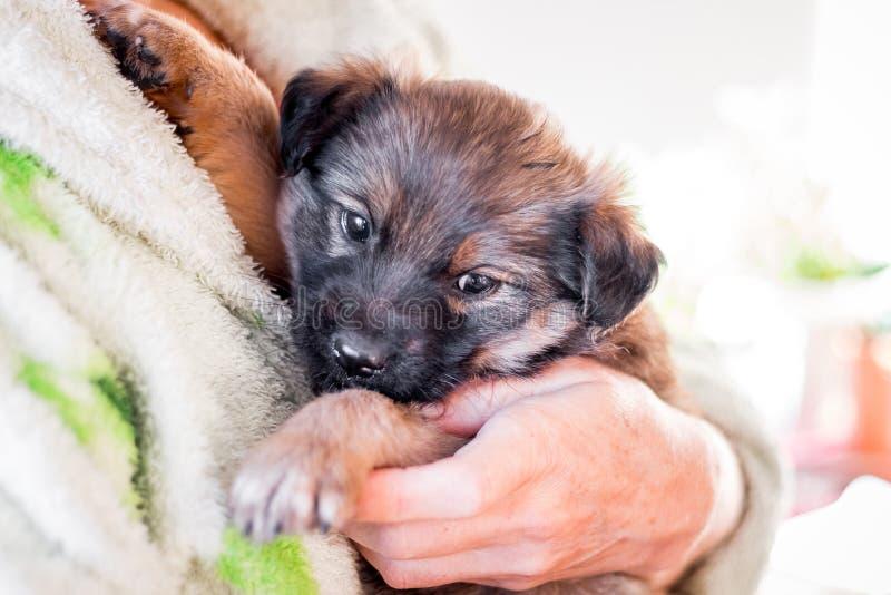 Een klein puppy in vrouwen` s wapens Liefde aan animals_ stock foto