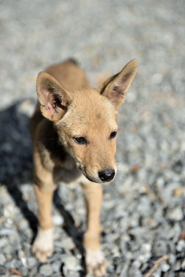 Een klein puppy wacht op haar lunch stock fotografie