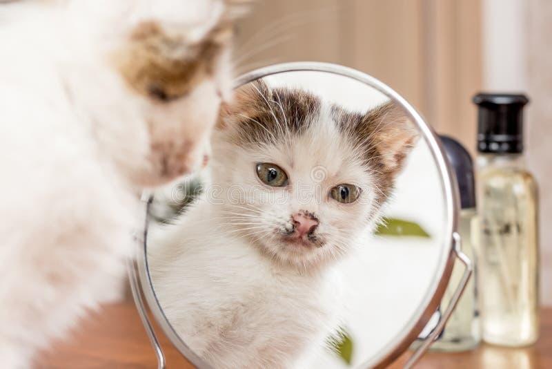 Een klein wit katje kijkt in de spiegel Bezinningskat ` s in Th royalty-vrije stock fotografie