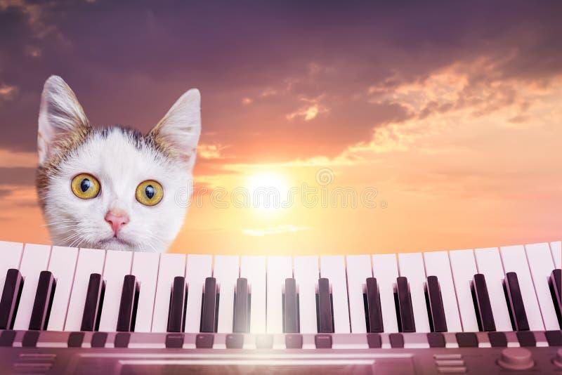Een klein wit katje met een grappige blik tegen de achtergrond o stock afbeelding
