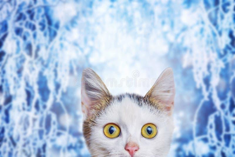Een klein wit katje op een de winterachtergrond met een grappige blik bij stock afbeelding